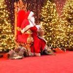 Bedeutung des Weihnachtsgeschäfts im Einzelhandel sehr unterschiedlich