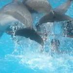 Delfin mit Flossen-Prothese als Vorbild für behinderte Kinder