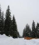 Deutsche Skigebiete: Nur in hohen Lagen ausreichend Schnee