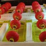 Singapore Tourism Board räumt auf der ITB Preise ab