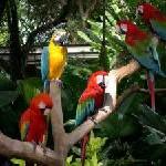 Singapur: Vogelpark, Zoo und Nachtsafari unter einem Dach