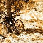 Mit dem Mountainbike den Kahlen Asten erklimmen