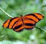 Spaß für Groß und Klein: neuer Schmetterlingsgarten auf Curaçao