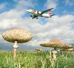 Fraport-Klimaschutz: 30 Prozent weniger CO2-Emission bis 2020
