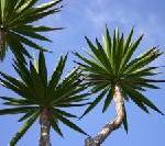 MEERwert unter Palmen in der grünen Lagune im Rogner Bad Blumau