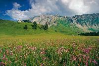 """""""Schweiz pur"""" bietet Urlaubserlebnisse im Einklang mit der Natur"""