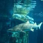 Mit den Haien tauchen im Palma Aquarium auf Mallorca