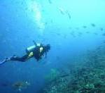 Pocket-Guide: Rotes Meer 2008 – Praktisch und kompakt: tauchen-Geheimtipps in der Tasche