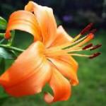 Die Althorp Garden Show zeigt Englands schönste Seiten