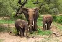 Elefantenführerschein mit Wanna Tours