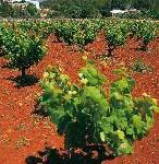 Balearen: Wein und Würste – Das Fest des Landweins von Sant Antoni de Portmany