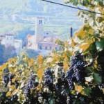 Mozart, Marzemino und Monet: Herbst-Highlights rund um Rovereto