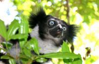 Madagaskar: Heimat der Lemuren, Chamäleons und Baobabs