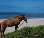 Entdecken Sie Curaçao per Pferd