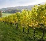 In Vino Sanitas – Gesundheit und Wohlfühlen im Weinberg