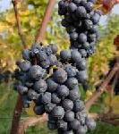 Weltklasse: Weinbau in Oregon