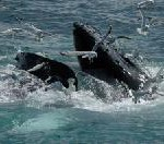 Whale Watching in Sri Lanka