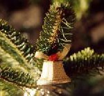 Vorverkauf läuft: Sonderzug des Vertriebsservice Ostbayern fährt am 13. Dezember 2008 zum Wiener Christkindlmarkt