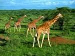 Singles auf Safari in Kenia – Exklusive Fernreisen für Alleinreisende