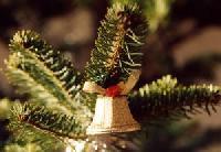 Streifzug des Monats Dezember: Raus aus der Stadt – in Brandenburg auf das Weihnachtsfest einstimmen