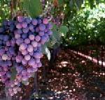 Ruta del Vino de Navarra präsentiert sich mit kulinarischen Spezialitäten und Weinen