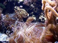 Abtauchen vor Phuket: Künstliche Korallenriffe gehen an den Start
