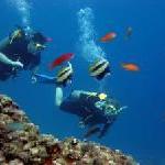 Abtauchen für den Umweltschutz – Freiwilligenarbeit auf den Seychellen