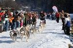 2. Internationales Schlittenhunderennen von 31. 01. – 01. 02. 09 in Angerberg/Tirol