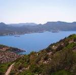 Auf Mallorca wächst ab Sommer 2009 der TUI Wald