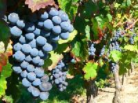 """Neuer Merian live!-Reiseführers """"Frankreichs schönste Weinregionen"""""""
