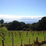 Weintourismus in der Region Provence-Alpes-Côte d'Azur