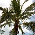 Beliebtheit der Bahamas wächst weiter: Zweistelliger Besucherzuwachs aus dem deutschsprachigen Raum für 2008