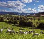 Flirten, Kuscheln und Hochzeiten in der Süd & West Steiermark