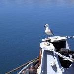 Silversea Cruises: Von der Hansestadt ans Ende der Welt