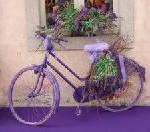 Mit dem Rad zur Lavendelblüte in die Provence