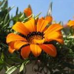 "Mit transavia.com zur Königin: Ganz Holland trägt am ""Koninginnedag"" Orange"