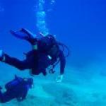 Barracudas, Zwerg-Seepferdchen und schwarze Korallen