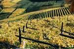 """Südtiroler Weinstraßenwochen 2009: """"Wein & Genuss in historischen Mauern"""""""