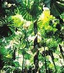 Auf dem Skywalk über den Regenwald schweben