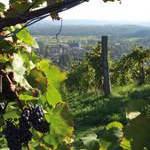 Wein, Architektur & Genusskultur in der Südsteiermark