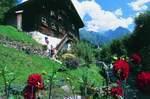 """""""Tri Alpin"""" und grenzenlos Wandern im Tiroler Oberland"""