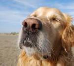 Hund und Herrchen herzlich willkommen: Bootsfahrten und Party für Vier- und Zweibeiner