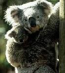 Australiens Tierwelt hautnah erleben