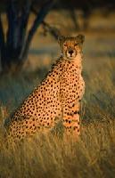 Wild, weit, Wüste: Namibia hautnah