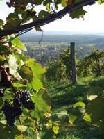 Österreich: Stürmischer Weinherbst in der Schilcherregion und Südsteiermark