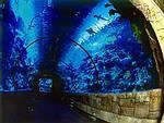 Auf Tuchfühlung mit Haien in Las Vegas