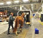 Tierische Premiere: PortGround verlädt erstmals Pferd am Leipzig/Halle Airport