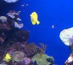 Palma Aquarium: Clownfische gegen den Winter-Blues
