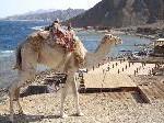 Louis Cruises: Vielfältige Auswahl an Kreuzfahrten im Mittelmeer und im Roten Meer