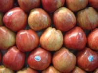 Apfel-Wellness & Bauern-Jazz & Frühlings-Tanzkurs